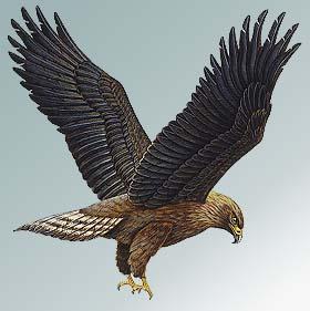 Risultati immagini per immagini di Aquila dal libro Nessun luogo è lontano